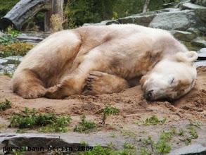 Photo: Knut - so suess, wenn er schlaeft :-)
