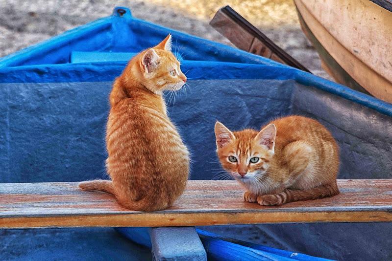 gatti di mare di antonioromei