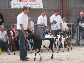 Photo: Rubriek 2: bonte lammeren. 1a. Kikky v/d Oude Schuur; 1b. Gerda 25; 1c. Lukky v/d Oude Schuur;  1d. Renske 6665; 1e. Roxanne van IJsselstee; 1f. Melkemas Menna 2; 1g. Animo's Nina;  2a. Driesprong Elda 5; 2b. Driesprong Elda 7.