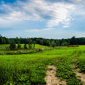 Field in the open by Cory Hill - Landscapes Prairies, Meadows & Fields ( sky, green, vibrant, landscape, country )