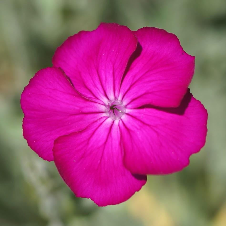 bloem en kelkblad