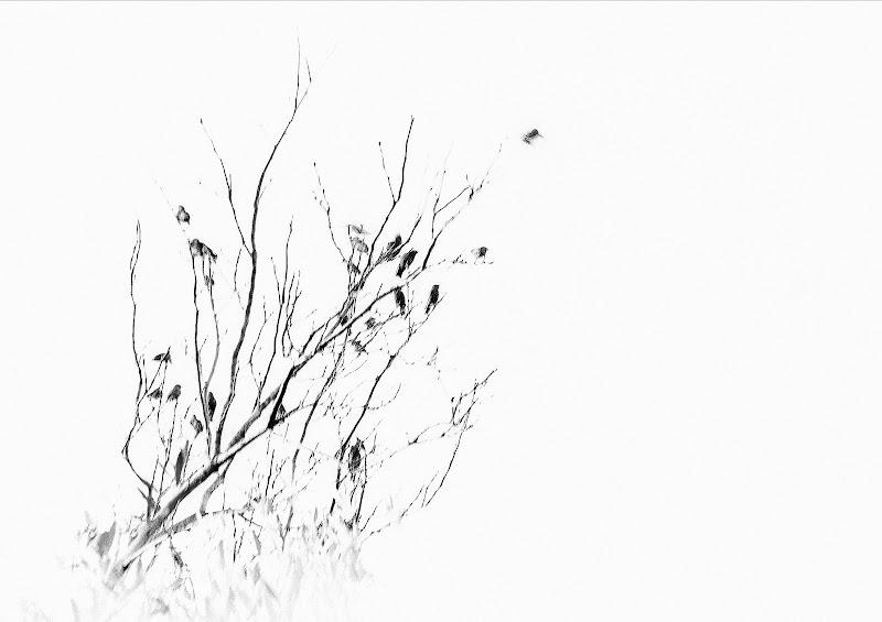 Les Oiseaux di Al