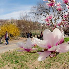 Spring by Florin  Galan - City,  Street & Park  City Parks ( tree, park, landscape, spring, flower, city,  )