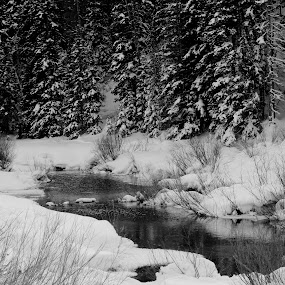 First snow fall by Jason Murray - Landscapes Mountains & Hills ( mountain, black and white, beautiful, canyon, forest, beauty, landscape, woods, mountains, nature, pine tree, snow, pine, stunning, river,  )