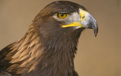 Best Eagle Wallpapers