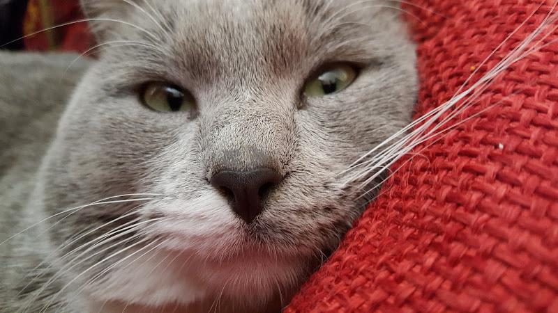 Dolcezza felina  di Cris24