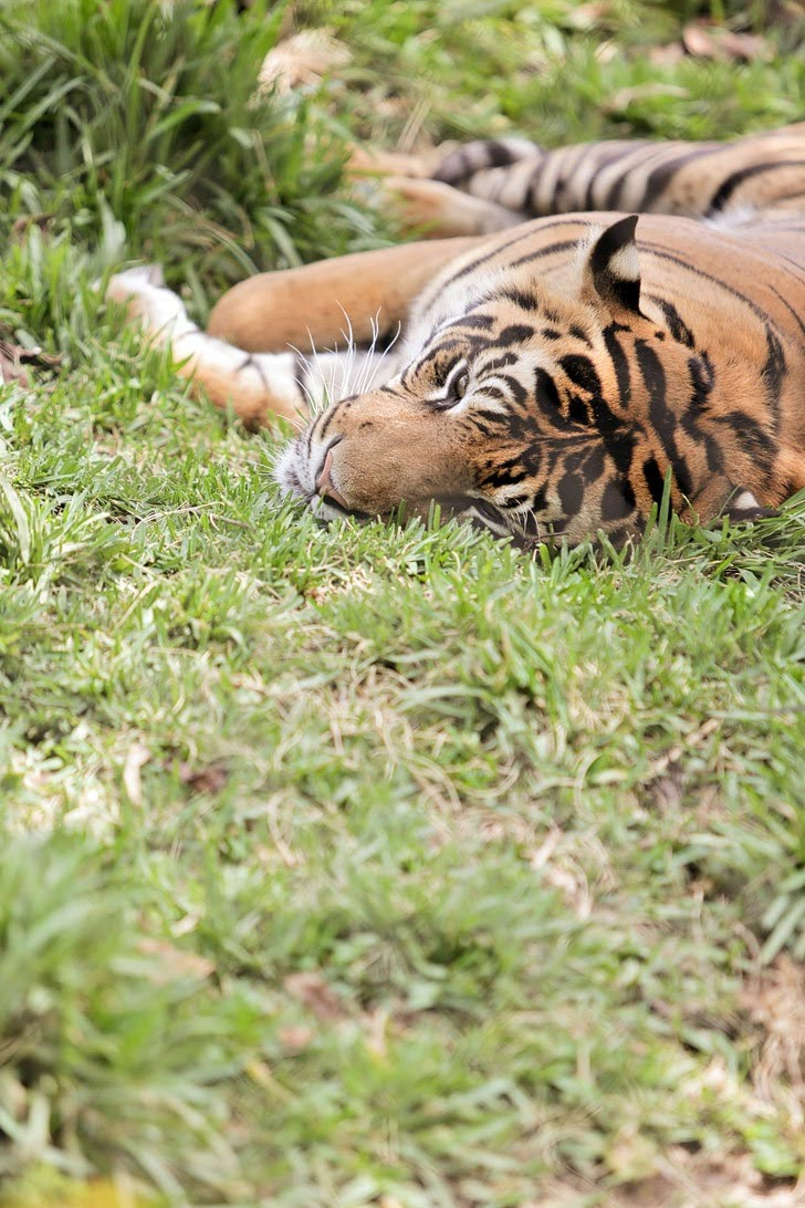 Tiger Trail San Diego Wild Animal Park.