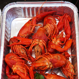 Shrimps by Sámuel Zalányi - Food & Drink Ingredients ( red, plated, shrimp, cooked, served,  )