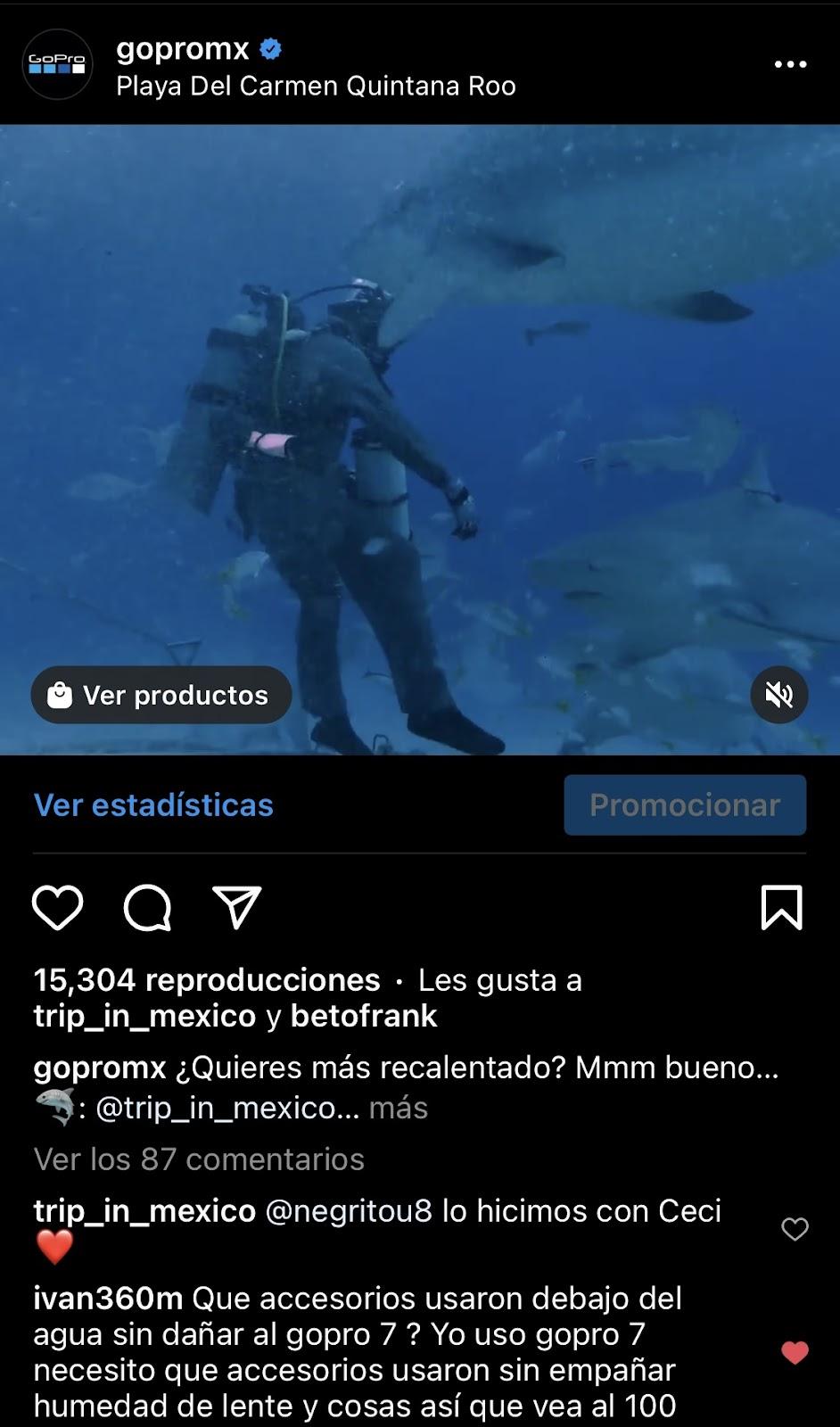 gopromx buzo nadando entre tiburones