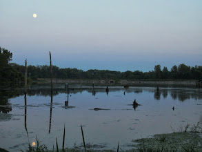 Photo: Moon reflected in a lake with dead trees at Carriage Hill Metropark in Dayton, Ohio.