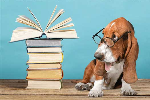 dog-book-stack-dreamstime_l_109914161-optimized