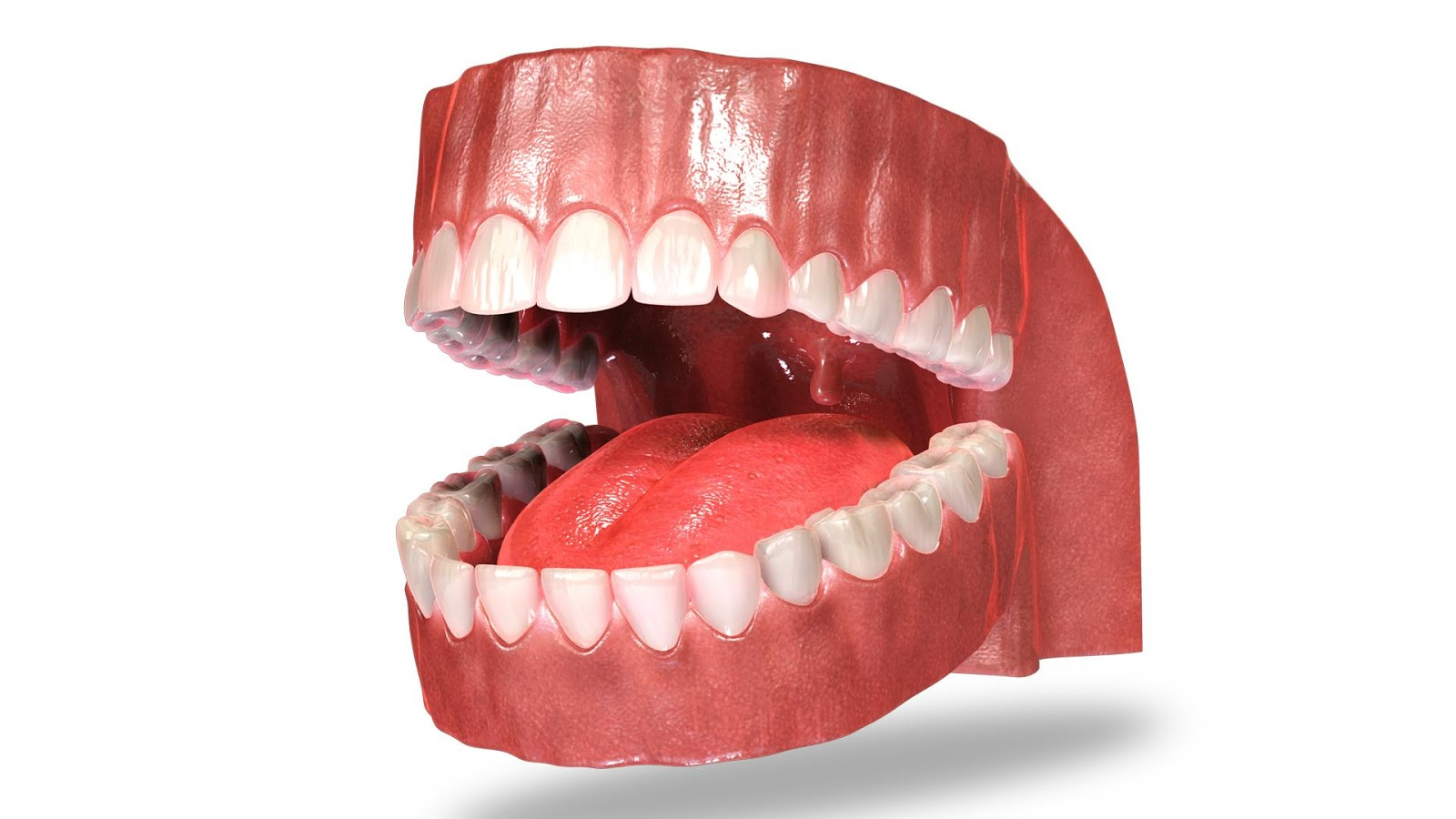 VR Teeth Anatomy - Android Apps on Google Play
