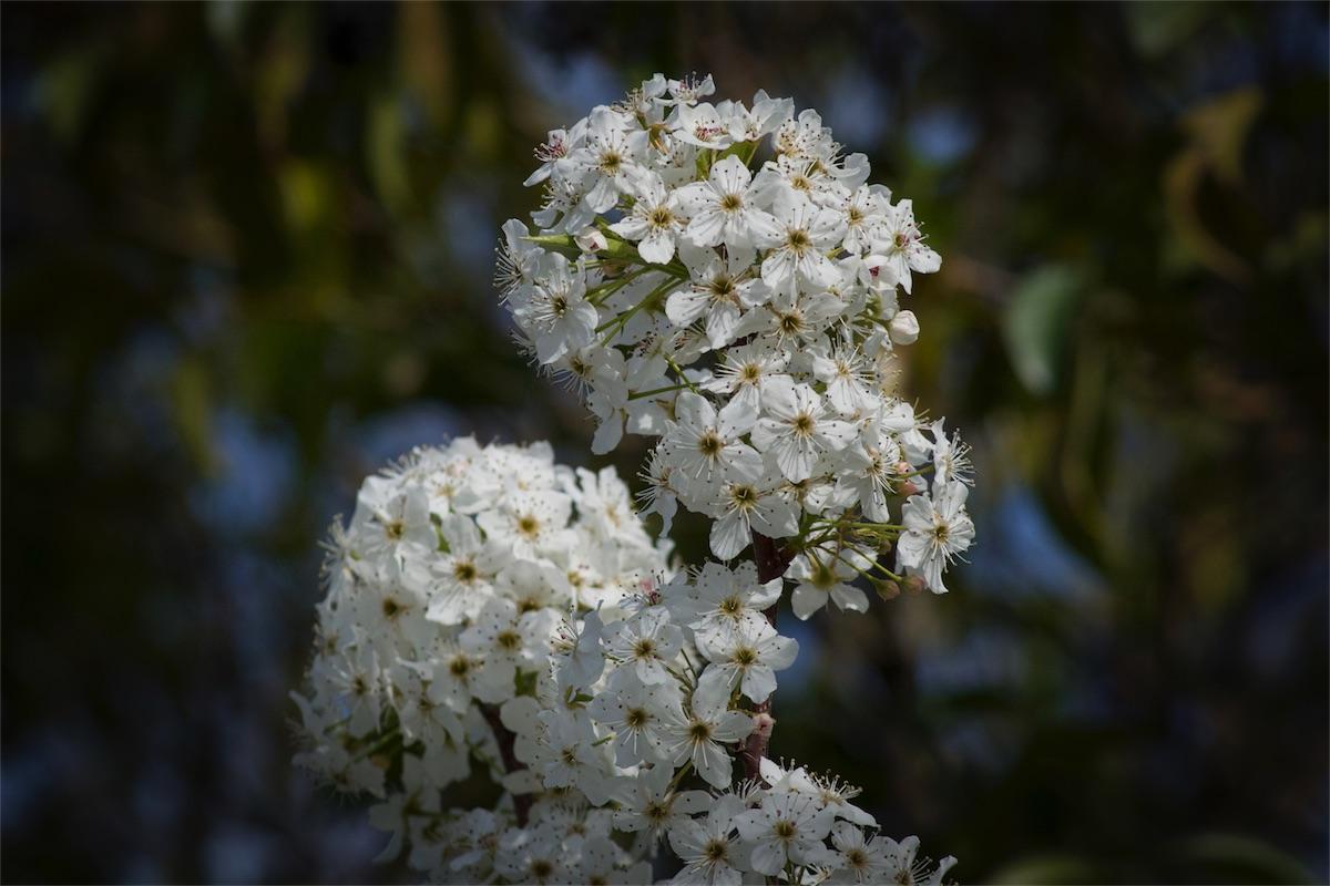 Blossoms 24 1.jpg