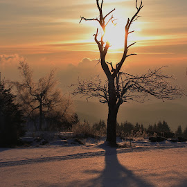 slunce  by Jarka Hk - Landscapes Sunsets & Sunrises ( tree, sunrise, landscape, morning, sun )