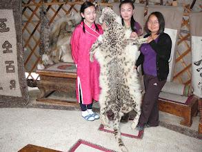 Photo: Mongol hópárduc prém, hópárduc gereznája