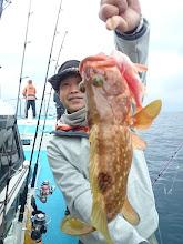 Photo: キジハタキャッチ! サクラダイが仕掛けに付き それを捕食に来たキジハタが 釣り人にキャッチされた・・・って感じですね。