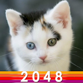 Cute Cat 2048 Android APK Download Free By ACKAD Developer.