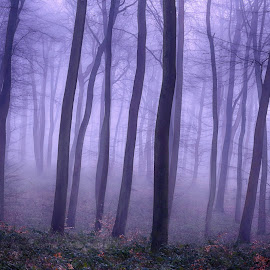Misty Forest by Ceri Jones - Landscapes Forests ( woodlands, foggy, forest, woods, winter, trees, misty )