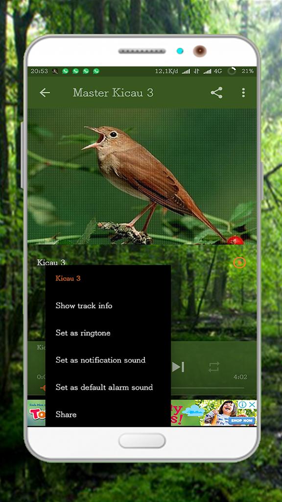 Kicau Burung Sikatan Londo : kicau, burung, sikatan, londo, Kicau, Burung, Sikatan, Londo, Download, Com.chikodev.kicauburungsikatanlondo