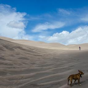 Desert Dog by Catie Wightman - Landscapes Deserts ( sand, desert, dog, Free, Freedom, Inspire, Inspiring, Inspirational, Emotion )