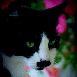 Grouchy by Brenda Shoemake - Animals - Cats Portraits (  )