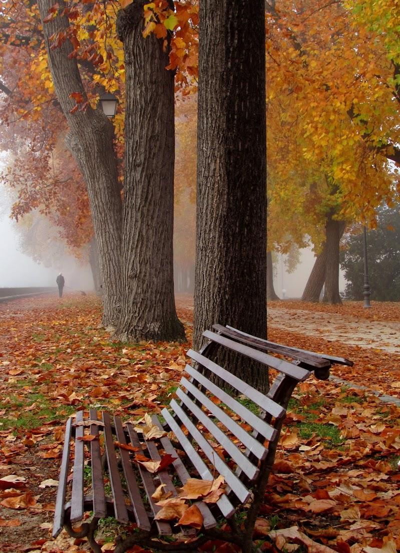 Foliage e nebbia di Giorgio Lucca