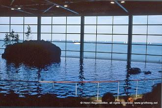 Photo: Polypodium vulgare - Gewöhnliches Tüpfelfarn