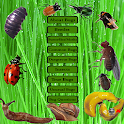 Bugs World icon