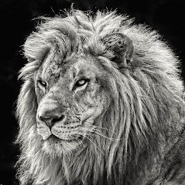 by John Larson - Black & White Animals