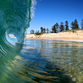 Pine Trees by Harrison Steele - Landscapes Waterscapes ( wollongong, blue, wave, barrel, surf )