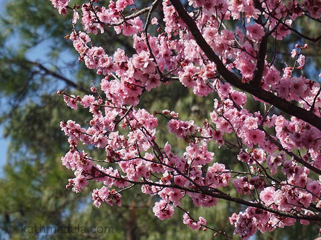 Auburn Japanese Garden