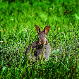Poster Bunny by Dawn Coen - Digital Art Animals ( green, rabbit, other animals, bunny, poster )