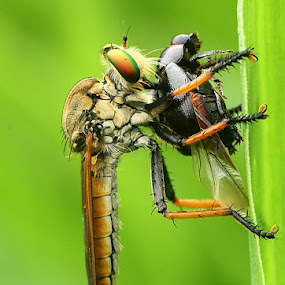 my breakfast by Caraka Pamungkas - Animals Insects & Spiders