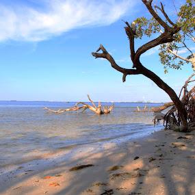 by Asya Atanasova - Landscapes Beaches ( sky, beach )