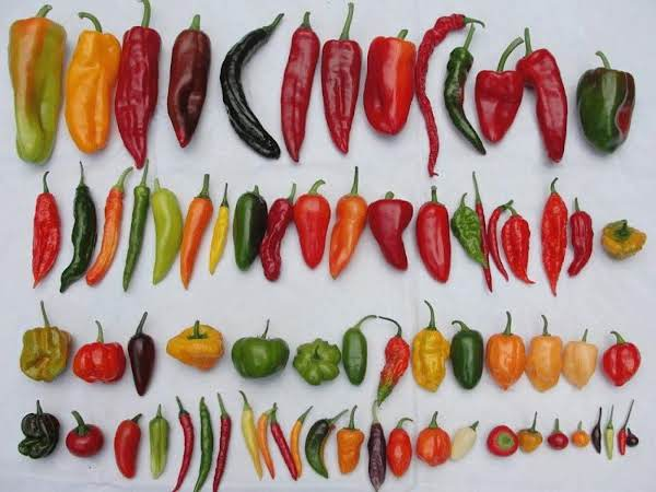 Which Chile/chili Do I Use? (sallye) Recipe