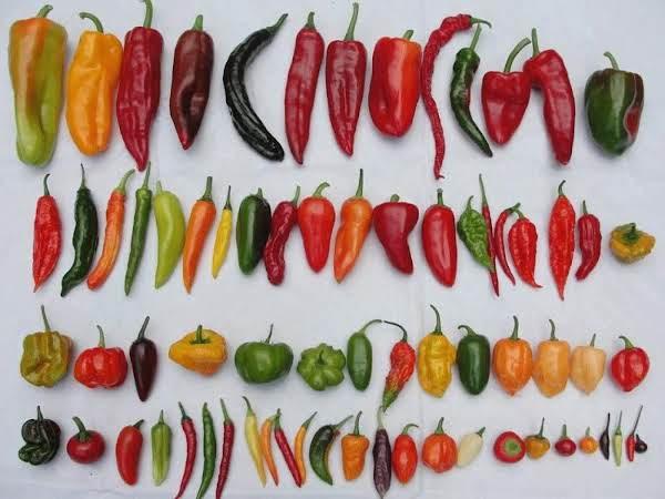 Which Chile/chili Do I Use? (sallye)