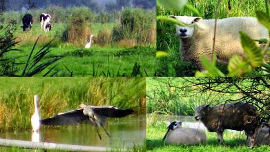 Photo: Puur Natuur in Nederland