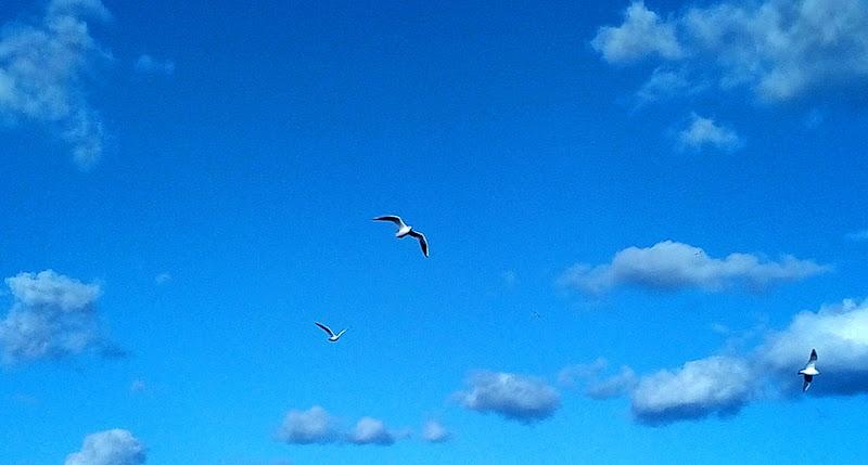 Gabbiani giocano a rincorrersi nel........blu di maria_laura_celli
