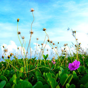 pink on the beach by Aep Saepudiah - Backgrounds Nature ( sky, blue, green, pink, leaf, flower )