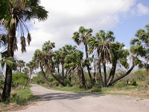 Photo: Along the entrance road to the Palm Grove.