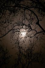 Photo: Caged Moon