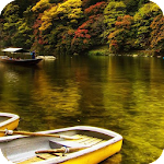 Forest River HD Live Wallpaper