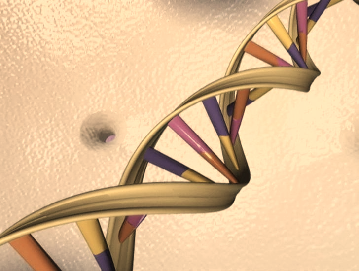 A DNA double helix is seen in an undated artist's illustration released by the National Human Genome Research Institute to Reuters on May 15, 2012. REUTERS