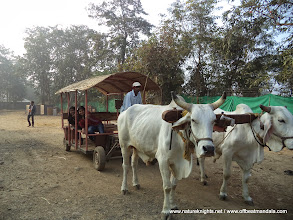 Photo: Local Eco-Transport
