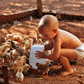 the boy feeding the chicks by Marcello Toldi - Babies & Children Toddlers
