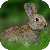 Rabbit and Bunny Sounds