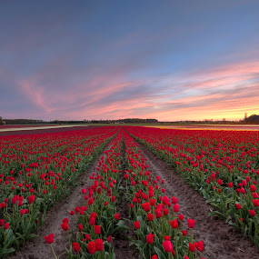 Colors - up and down by Kim  Schou - Landscapes Prairies, Meadows & Fields ( field, red, hdr, vesterborg, flowers, lolland )
