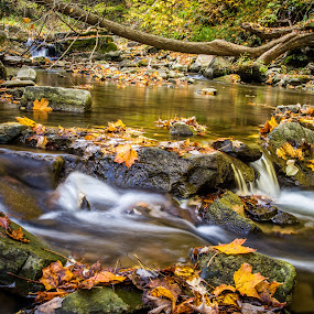 Fall Stream at Webster Falls by Trent Sluiter - Nature Up Close Leaves & Grasses ( canon, fall leaves on ground, fall leaves, dundas, 7d, pwcfallleaves, 2012, trent sluiter, webster falls, ontario, photo, photography )