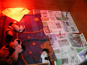 Photo: Eerste plasjes op de krant (10 dagen oud)