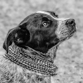 by Judy Rosanno - Black & White Animals ( parade, cowboy capital, texas, mardi gras 2018, bandera,  )